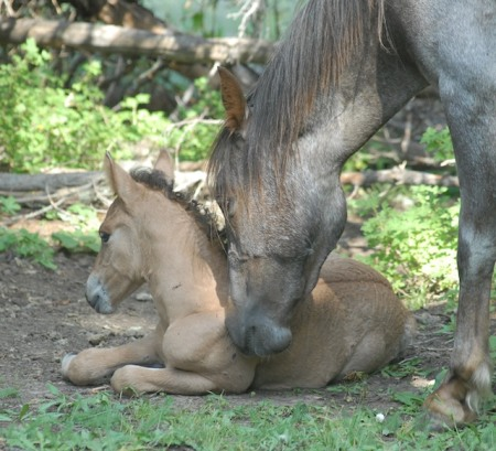 Week old Filly to be removed with mom