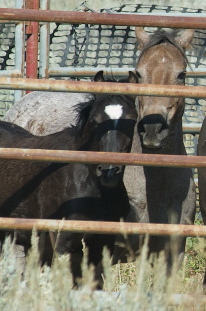 Sand and Chalupa's foal