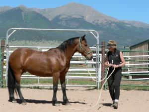 Ginger & Colorado
