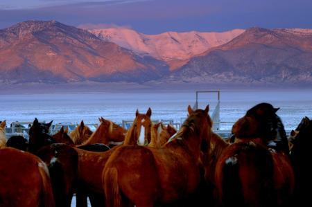 Antelope Valley Horses wait in 0 deg. temps in Dec 2007 roundup